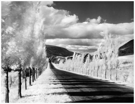 Photo Minor White 'Road with Poplar Trees', in the vicinity of Naples and Danseville, New York, 1955