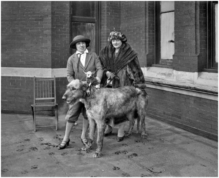 January 26, 1923. Washington, D.C. %22Largest and smallest dog at dog show.%22 Previously seen here. Harris & Ewing glass negative