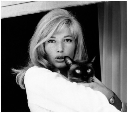 Monica Vitti The Italian actress Monica Vitti also often carried a cat in her arms while shooting the film High Infidelity Everett